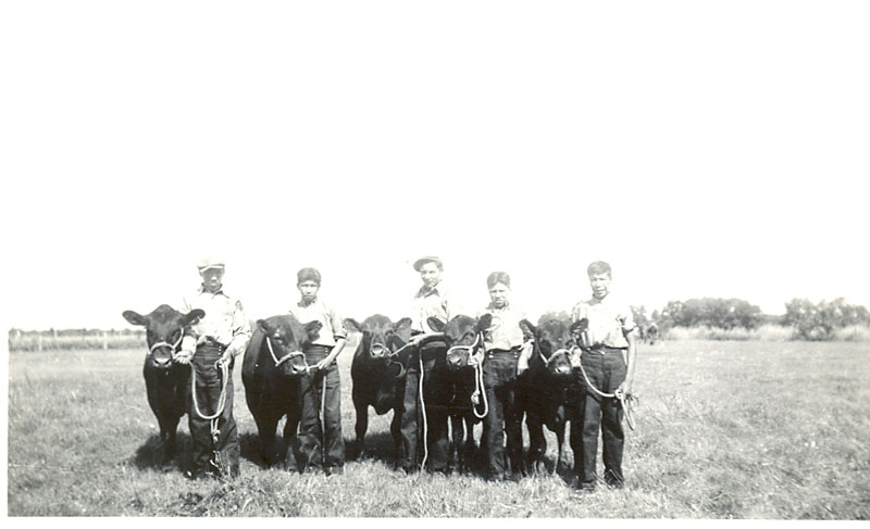 Boys from Portage la Prairie Indian Residential School with their Angus calves at the Portage Fair.