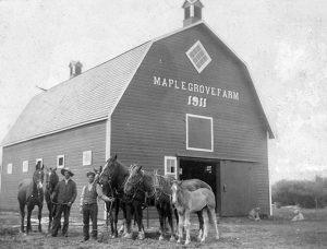 A barn and horse team on Maple Grove Farm.