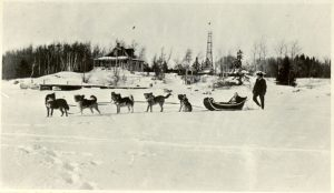 Woman being pulled in a sleigh by a dog team.
