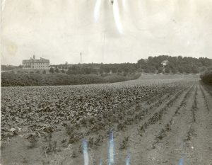 The Brandon Industrial Institute farm, with school building in the background.