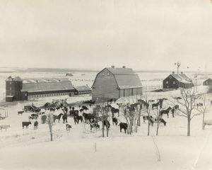 Livestock and barns, Brandon Industrial Institute
