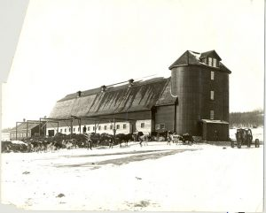 Cows and dairy barn at Brandon Industrial Institute
