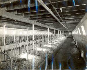 Inside of dairy barn.