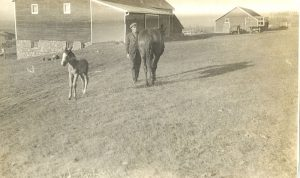 A horse and new filly, with farm buildings in the background, Brandon Industrial Institute.