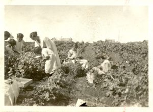 Women and children picking vegetables in the garden, Norway House Indian Residential School.