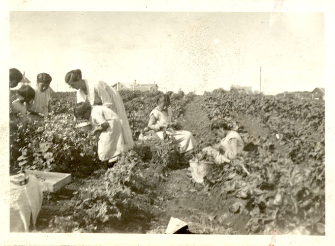 Girls picking vegetables in the garden.