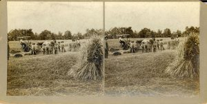 Boys and instructors bringing in the hay, Mount Elgin Institute.